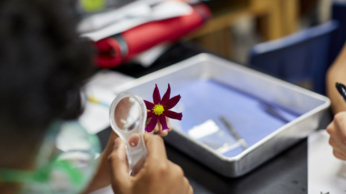Students examine a flower